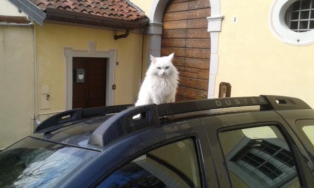 La gatta sul tetto che scota