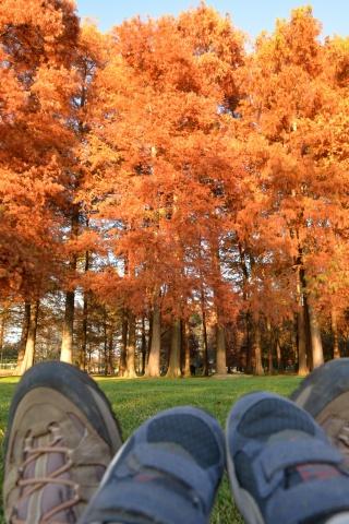 Osservando l'autunno