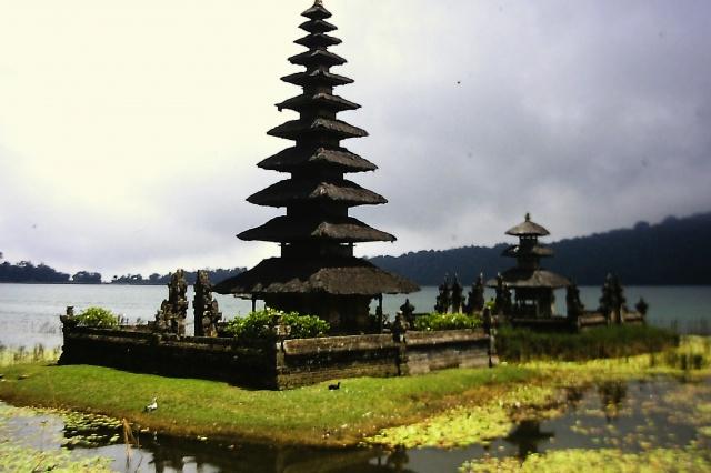 Albero o tempio?
