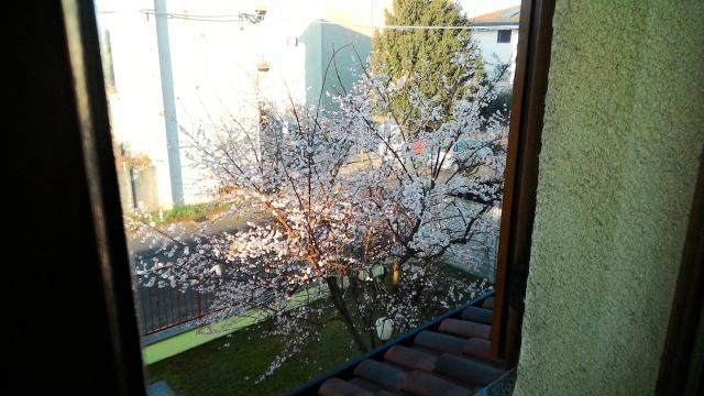 Primavera a dicembre ad Olgiate Olona