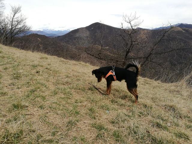 Flora e fauna al Sacro Monte
