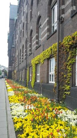 Copenhagen in fiore